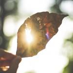 hojas-reflexiones-de-la-vida-microrrelatos-pensamientos-abstractos-anadeseria